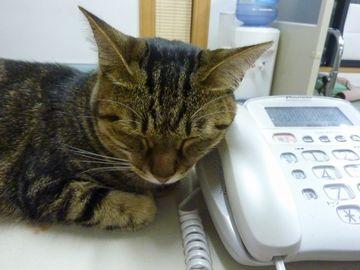 電話機を耳に当てるんですか?