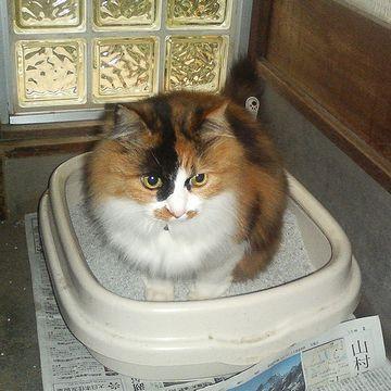 わたしのトイレが無い!