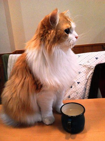 そのままテーブルで飲むの?
