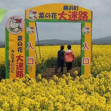 『陸奥横浜(むつよこはま)』菜の花で有名なようです