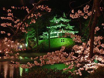 高田城(高田公園)の桜