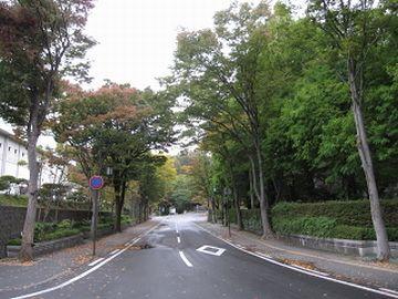 千秋公園・中土橋通り