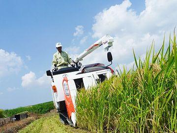 稲刈りは汗だくの作業
