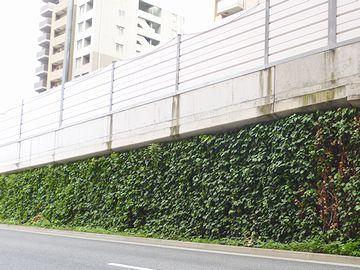 壁面緑化された橋脚