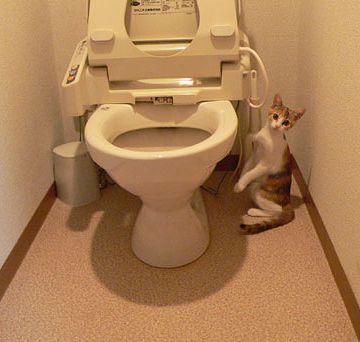 トイレだなんて、思ってないよな?