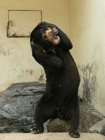 クマゲラなんて云うから、クマを襲って食べるのかと思った