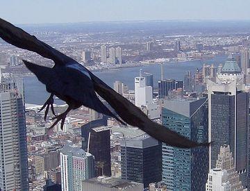 鳥に高所恐怖症は、いるんでしょうか?