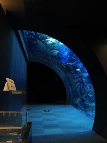 『男鹿水族館GAO』男鹿の海大水槽・水中トンネル