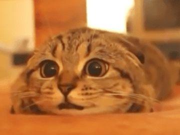 ホラー映画を鑑賞する猫