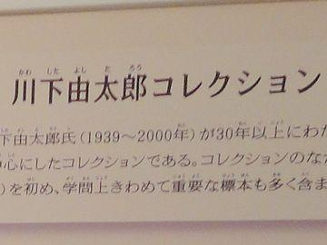 川下由太郎コレクション
