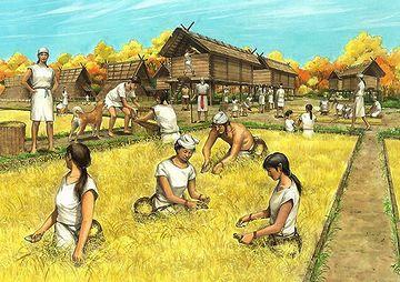 弥生人は、集団で農業をし……