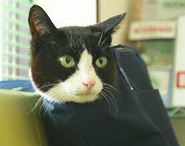 これは、生きた猫鞄