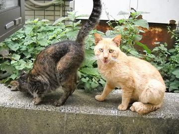 右のネコ、ぜったい、こう言ってます→『くっさー』