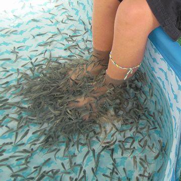 足元には、魚はうじゃうじゃいた
