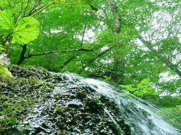 水は、白神山地の伏流水