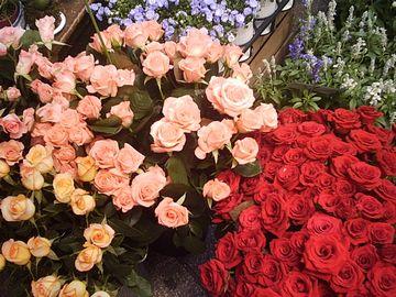 店頭の薔薇