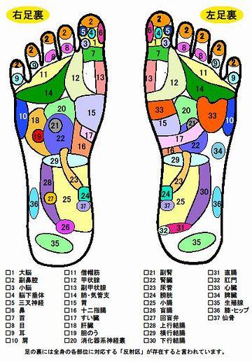 足の裏のいろんな場所が、いろんな臓器と繋がってる