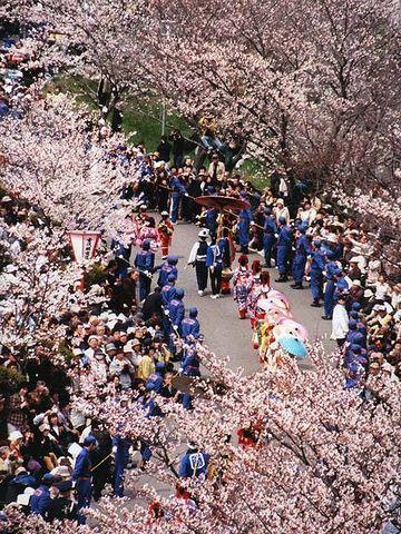 分水おいらん道中・3,000本の桜並木の下