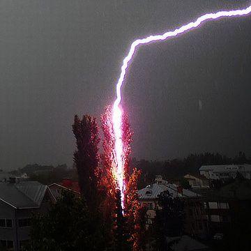 何十年前かの落雷で大枝が折れ……