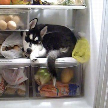とんでもないヤツが、冷蔵庫前にいるんだった。