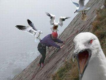 これはもちろん鳥葬ではありません。怒ってますね。巣が近いんでしょうか。