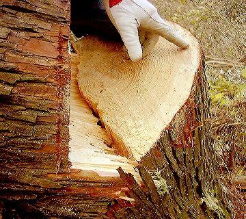 材木の断面を見てもわかるとおり、材の中はびっしり詰まってるわけでしょ