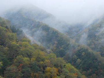 木々を隠すように山霧がかかってた記憶があります