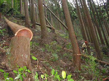 割り箸を作るために木が伐採されるから、それを防ごうって運動でしょ