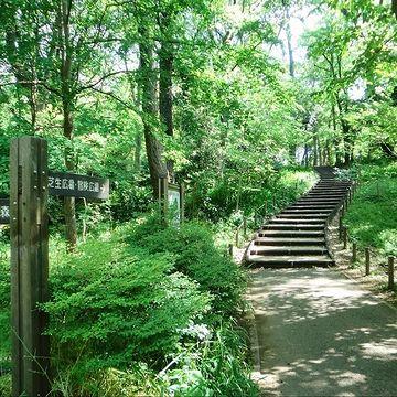 都立林試の森公園の園路
