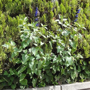 民家の塀際に、謎の花を発見