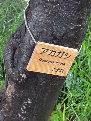 幹に、樹名板