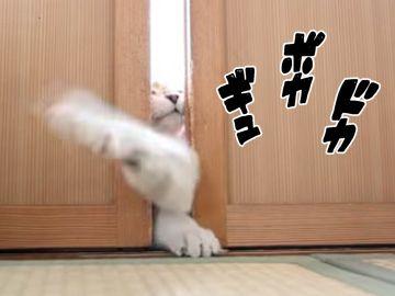 猫の手を借りても、ぜったいに開けられません