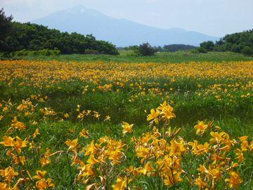 6月上旬から咲くニッコウキスゲは見ものだとか