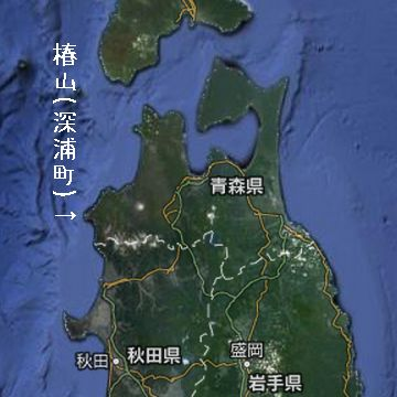 ここは、日本海側における椿の北限じゃ