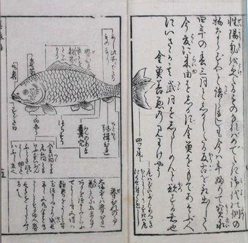 江戸時代の金魚飼育手引書『金魚そだて草』