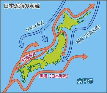 新潟沖は、暖流の対馬海流が流れてるからね