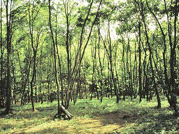 雑木林は、下草が刈られてるのが特徴