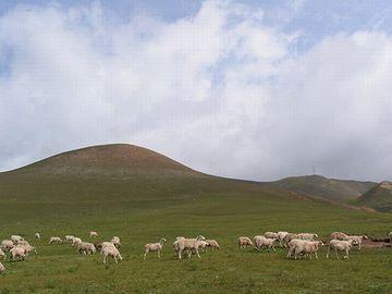 哺乳類が栄え、豊かな草原が地球を覆ってました