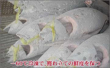 箱根の山中で放って置かれたら、たぶん凍死です