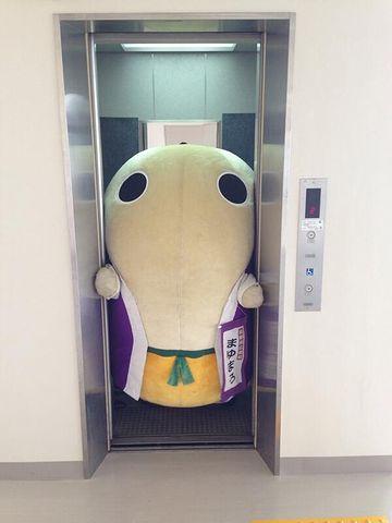 『まゆまろ』、太り過ぎてエレベーターに挟まる
