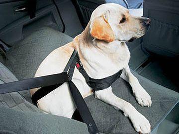 シートベルトをお締めください