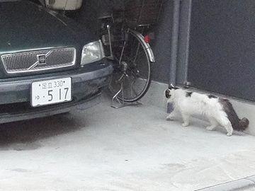 また猫がいたので、パチリ