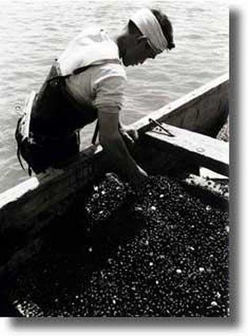 八郎潟・シジミ漁