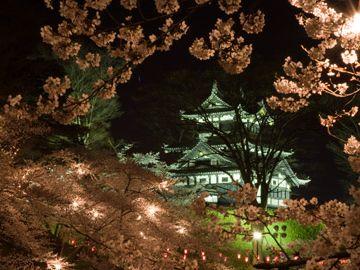 高田城のサクラが有名だよ