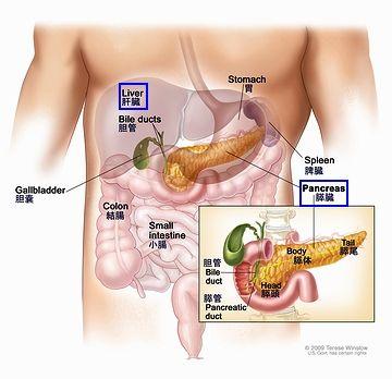 膵臓がんと肝臓がん