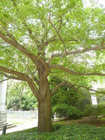 館外で樹木を撮影