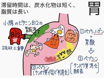 消化は胃の役目