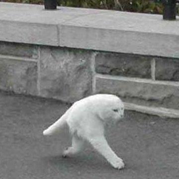 ストリートビューに映りこんだ2本足の猫