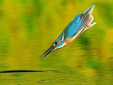 翼にそういう仕組みのあるカワセミが、選抜されて生き残った
