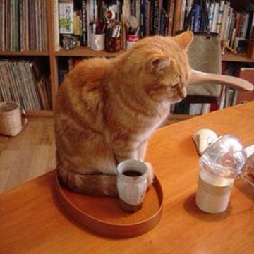 あんたは、日本一、茶道に向かない人間だと思うわ